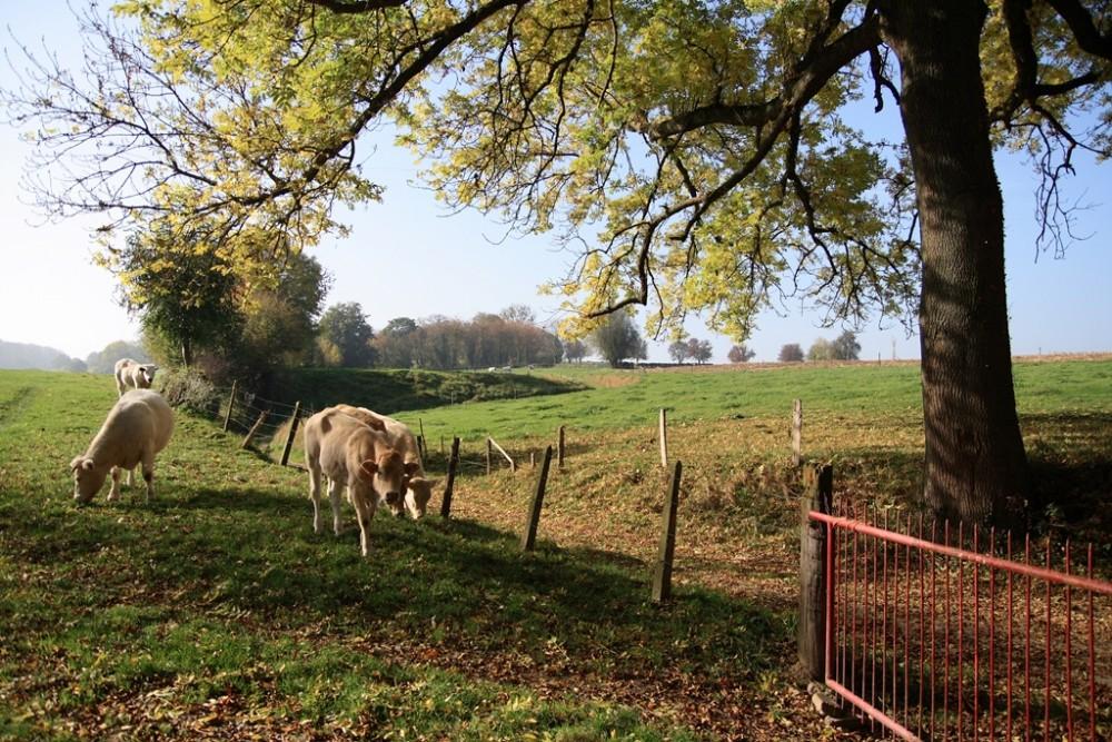 koeien-in-de-wei.jpg