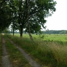 Sint-Huibrechts-Lille: De Bosuil (blauw)