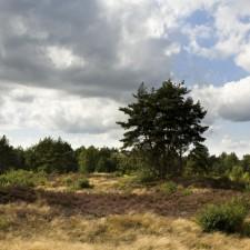 Hoge Kempen: Oudsberg - Instapplaats camping Zavelbos  (P2) (rood)