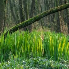 Maasvallei: Drie Eigen - instapplaats Douanekantoor Kessenich (P3) (groen)