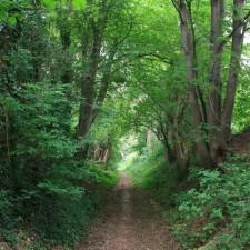 Greenspot Mettekoven - grand cru landschap (groen)