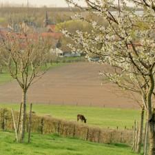 Greenspot Mettekoven - grand cru landschap (rood)