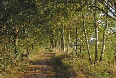 De Groote Heide: Kolis - startplaats Torenstraat (rood)