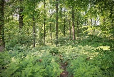 Verborgen Moois Herkenrodebossen - Startplaats Ten Hove (rood)