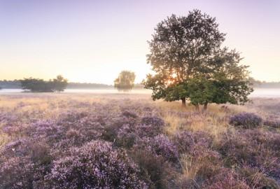 Bosland: Heuvelse Heide - startplaats De Meerpaal (rood)