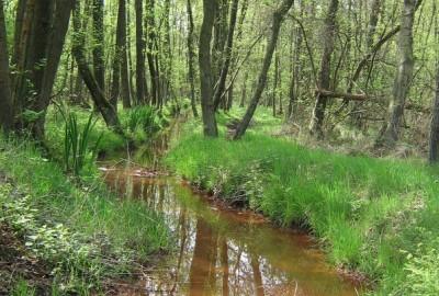 Blauwe Kei - De Maat: Ecocentrum De Goren (oranje)
